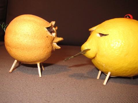 Der letztjährige Zitronenschwein gibt seine Erfahrungen an das heurige weiter